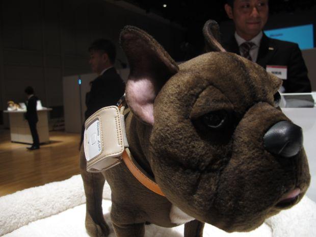 ドコモ、愛犬向け「ペットフィット」開始。犬用通信機で愛犬の健康管理、2万5900円(動画) - Engadget Japanese