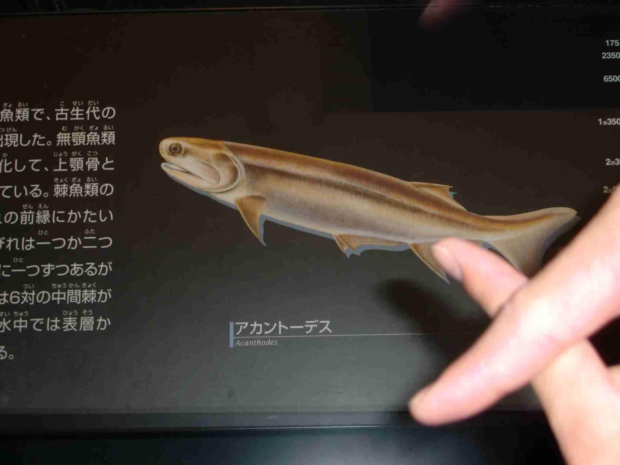 この魚の化石の名前がやばいwww