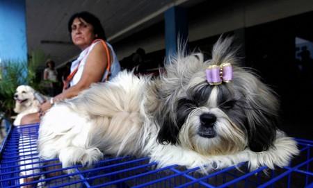 飼い犬と遊んで擦り傷、犬3匹が傷口を舐める→6週間昏睡し片腕両足切断となった女性…