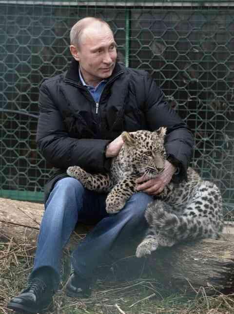 (おそロシア)記者を襲った猛獣のヒョウと戯れるプーチン(海外の反応) : 海外のお前ら