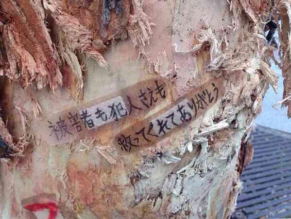 「救ってくれてありがとう」―名古屋暴走車事件で車を止めた木に感謝のメッセージ | おたくま経済新聞