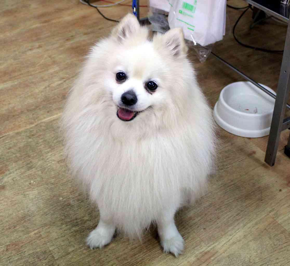 NTTドコモ、スマホで愛犬の居場所を確認できるサービスを来月から開始