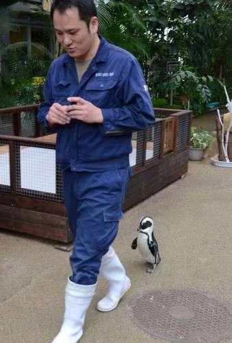 飼育員に恋をしてしまったペンギン、猛アタックするもふられる