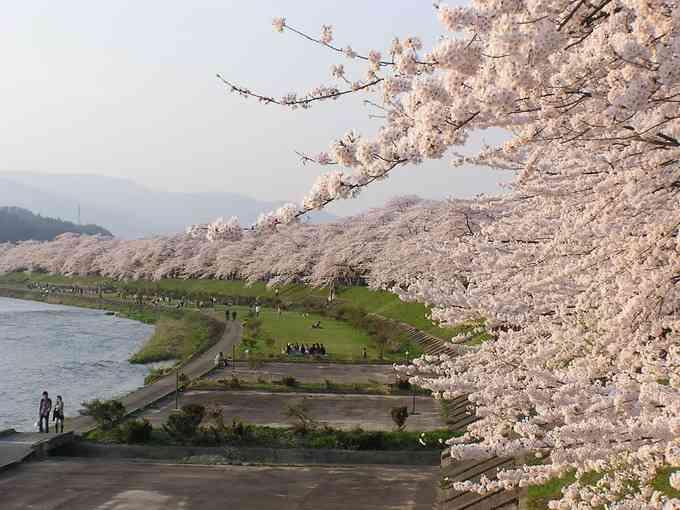 角館の桜 - 伝統行事 | 一般社団法人 角館町観光協会