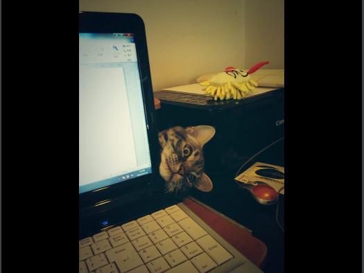 【画像】パソコンの後ろから顔を出すネコが話題に