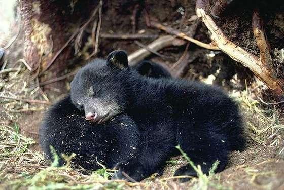 お互いを枕にして眠る動物が可愛すぎるwww