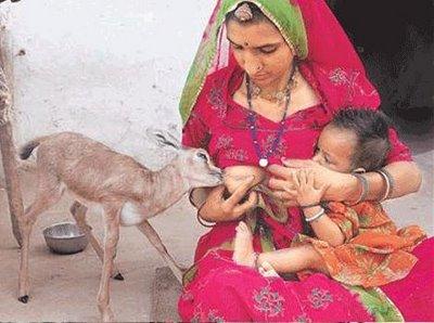 瀕死の子犬を助けた方法が物議…自身の胸から直接「授乳」した女性