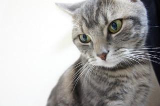 「なぜ猫は可愛いのか」-獣医師がマジメに解説してみた | マイナビニュース