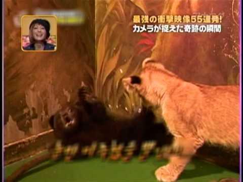 臆病すぎる子熊 - YouTube