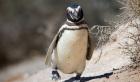 英国の動物園でペンギンに抗鬱剤