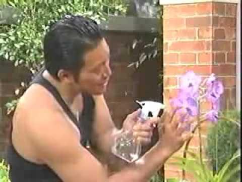 チョコボーイ山口の悪趣味の園芸 - YouTube