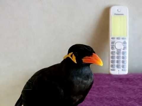 あべちゃん:仕事の電話に出ておいてやった - YouTube
