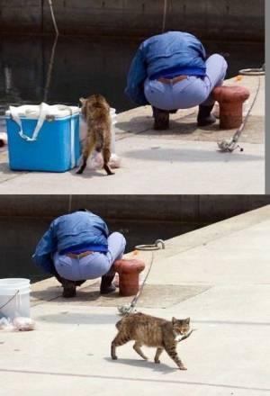 猫のご飯について