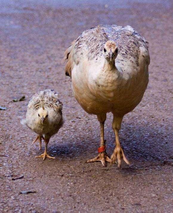 笑っちゃうほどそっくり…あまりにも似ている動物の親子たちの写真22枚