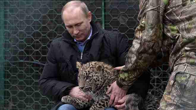 猛獣使いプーチン、ペルシャヒョウの子どもをてなずける。その後記者、襲われる。 : カラパイア