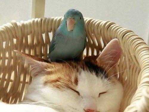 仲良しのアルパカとネコをご覧ください