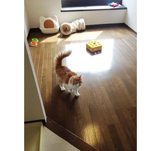 東京都内で「猫付きマンション」が続々と拡大中 | マイナビニュース