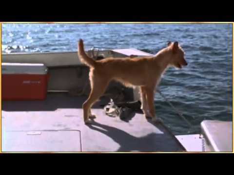 Dolphin and Dog - Let's be Friends.flv - YouTube