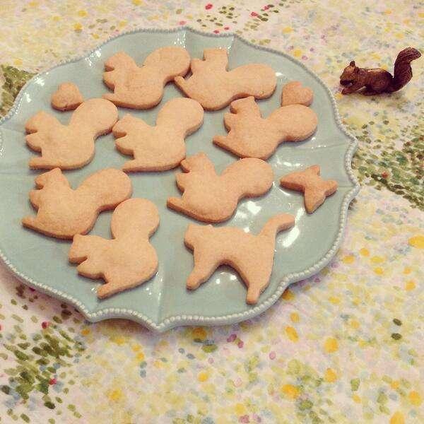 北海道のクッキーお姉さんの所に行くリスの数が増えてるww