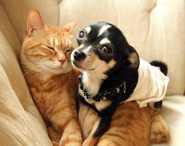 ペットを飼っている方!! 臭い対策どうしてますか?