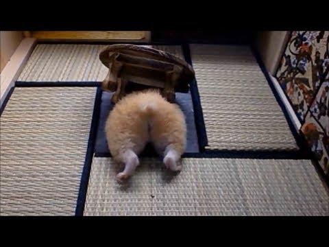 ハムスターの穴すっぽり10連発Vol.1(hamster butt!vol.1) - YouTube