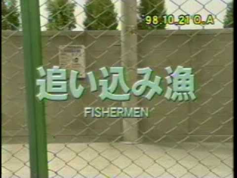 (笑う犬の生活) 追い込み漁 - YouTube