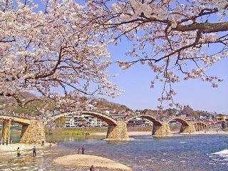 【全国】オススメの桜スポットは?