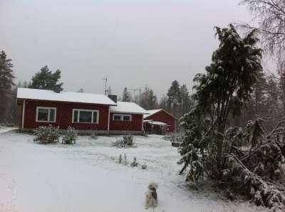 フィンランド文化研究所 | ♪ 女たちのフィンランド ♪    北欧の森で暮らす