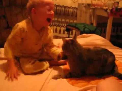 Cat vs Baby - YouTube