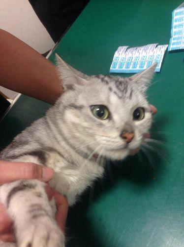 古美術商殺人、容疑者宅から猫19匹救出 6月に里親会 NPO法人「ニュース映像で猫に気づいた」