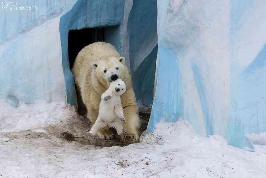 【画像】子育て中の動物が可愛い