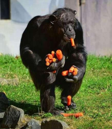 なんて食いしん坊、でもそれがいい…お腹を減らした動物たちの写真13枚