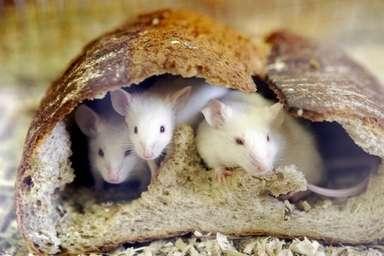 赤ちゃんがネズミにかじられ死亡、米国 写真1枚 国際ニュース:AFPBB News