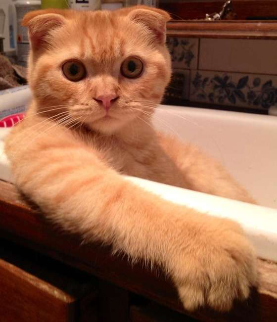 流し台が好き過ぎる猫達ww