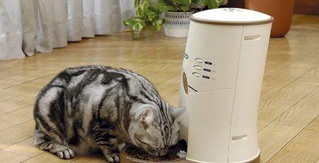 猫の世話で自動餌やり機に頼りすぎてしまった結果wwwwwww : オレ的ゲーム速報@刃