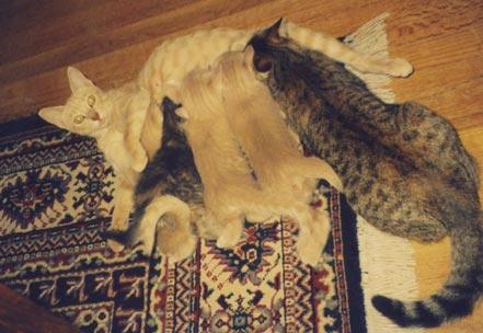 【画像】愛情深い母猫が可愛い