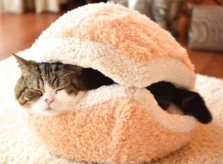 ネコちゃん、大よろこび! 『ネコ用アイデア家具』25選(画像) - ViRATES [バイレーツ]