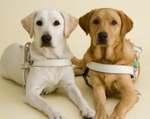 盲導犬にフォークを刺し虐待する人間が埼玉県に居ることが発覚