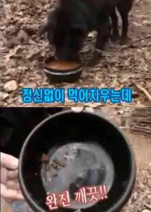 【閲覧注意】韓国「犬に犬肉を食べさせたらどうなる?」鬼畜過ぎる番組が過去に放送されていた…