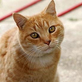 ネコを殺し、マンション廊下へ投げ込む 容疑で42歳無職男を逮捕「殺してはいない」