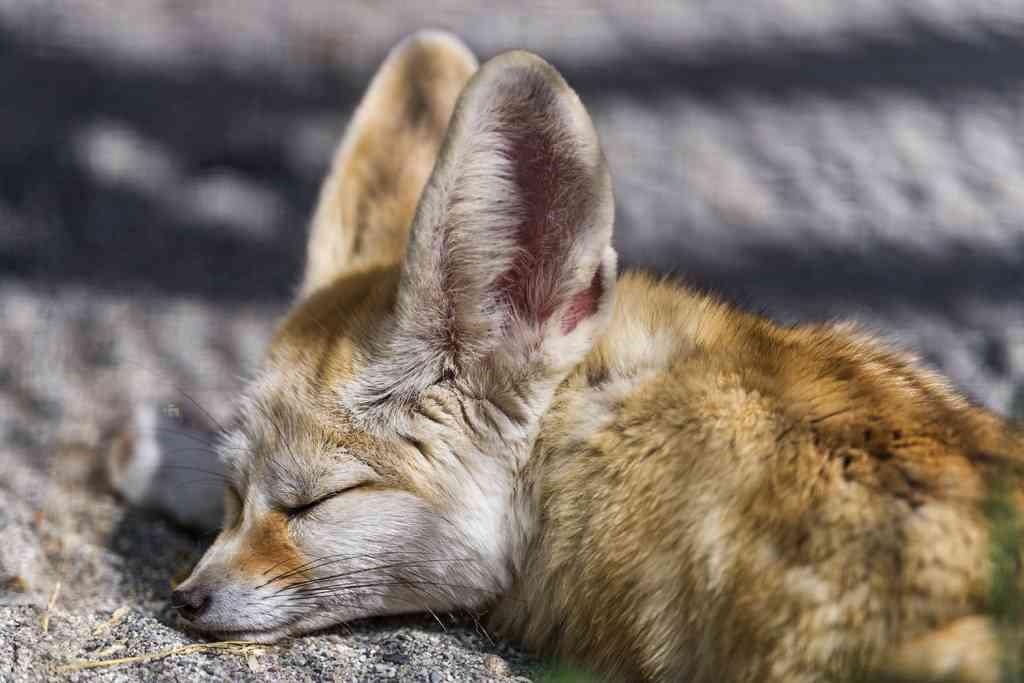 動物達の寝顔の画像ください-i-19-0