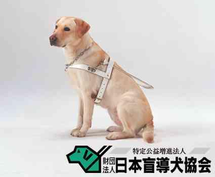 盲導犬にフォークを刺すクズが埼玉県に居ることが発覚・・・盲導犬が絶対に吠えないように訓練されていることをいいことに虐待する人間 #埼玉:ハムスター速報