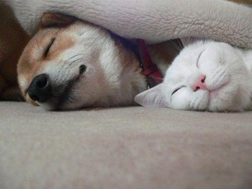 動物達の寝顔の画像ください-i-20-0