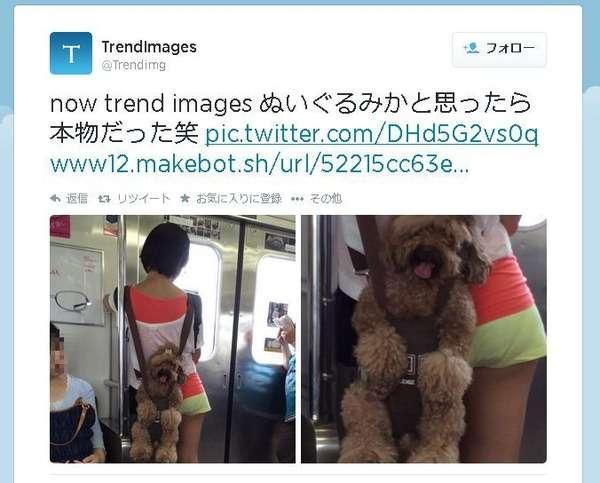 電車内で犬をおんぶした写真に「虐待だ」と批判殺到!→市販品だった。