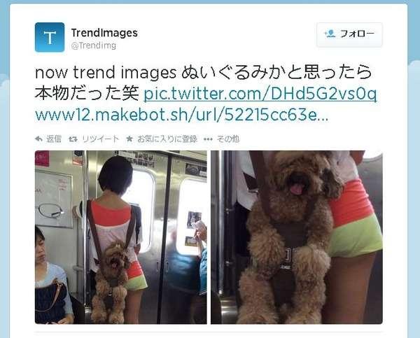 電車内で犬をおんぶした写真に「虐待だ」と批判殺到!→市販品だった。 面白ニュース 秒刊SUNDAY