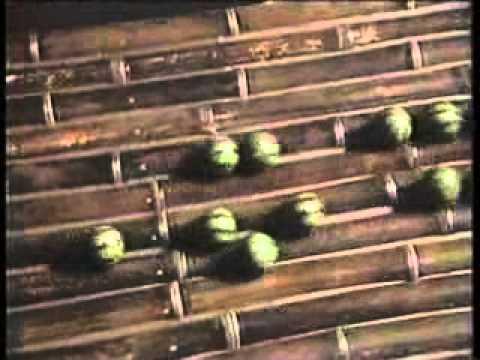 90年代初期のバカ殿様 スイカ星人現る!? - YouTube