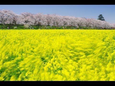 春風 Rihwa(リファ) 歌詞付き♪ Cover - YouTube