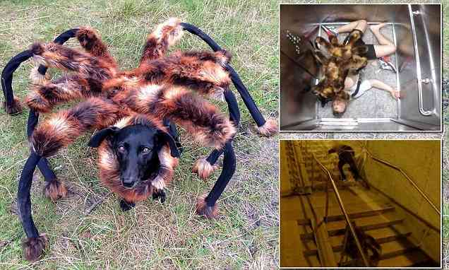 Dog dressed up as huge spider makes unsuspecting victims flee in video | Mail Online
