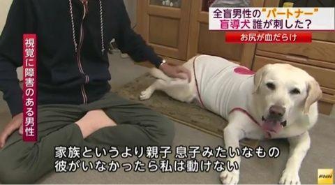 盲導犬の後つける若い男 沿線駅で目撃情報 オスカー事件との関連捜査
