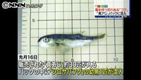 アジのパックにフグ混入 横浜市のスーパー(日本テレビ系(NNN)) - Yahoo!ニュース